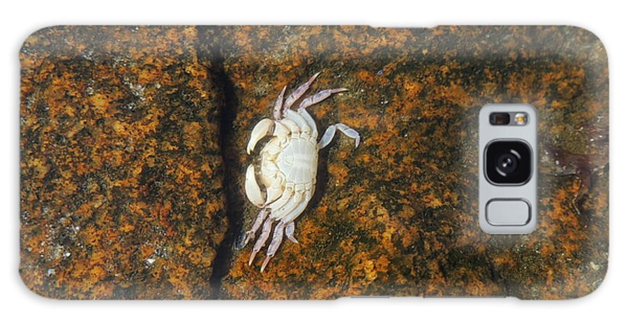 Crab Galaxy S8 Case featuring the photograph Little Dead Crab Under Water by Anastasia Konn