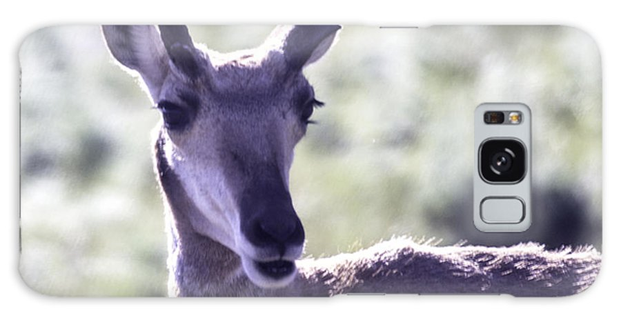 Pronghorn Antelope Galaxy S8 Case featuring the photograph Little Pronghorn by Carolyn Fox