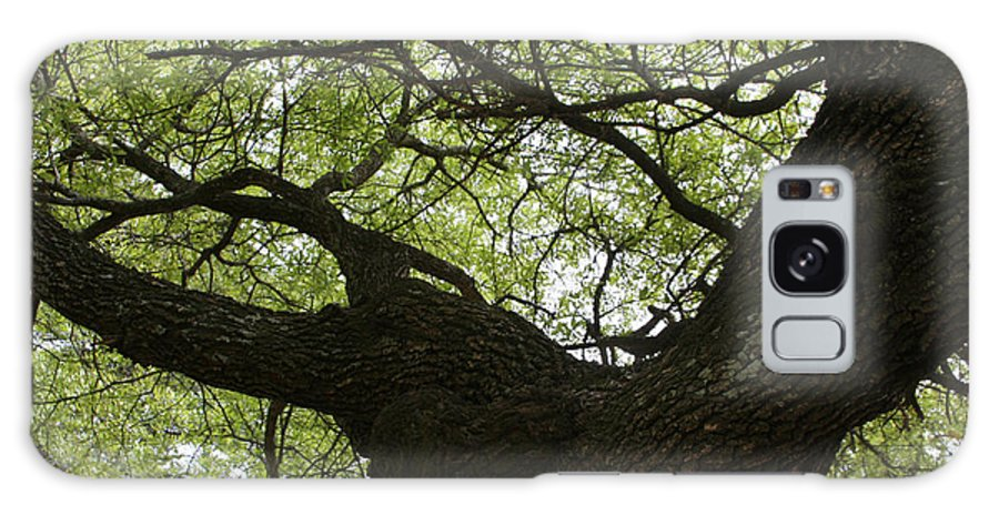 Live Oak Tree Galaxy S8 Case featuring the photograph Living Tree by D L Darden