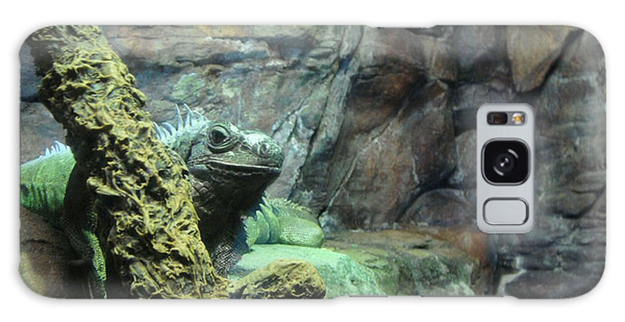 Lizards Galaxy S8 Case featuring the photograph Lizards by Tinjoe Mbugus