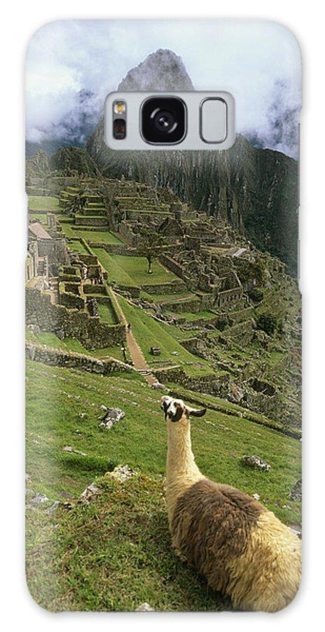 Urubamba Valley Galaxy S8 Case featuring the photograph Llama At Machu Picchu by Chris Caldicott