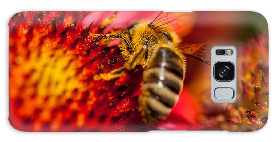 Summer Flower With Bee Galaxy S8 Case featuring the photograph Loads Of Bee Pollen by Sabine Edrissi