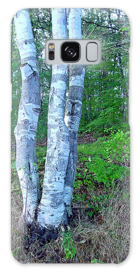 Birch Tree Galaxy Case featuring the photograph Lone Birch In The Maine Woods by Suzanne Gaff