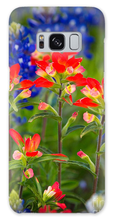 America Galaxy S8 Case featuring the photograph Lone Star Blooms by Inge Johnsson