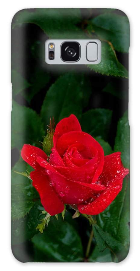Flower Galaxy S8 Case featuring the photograph Lonely Rose by Benjamin Reed