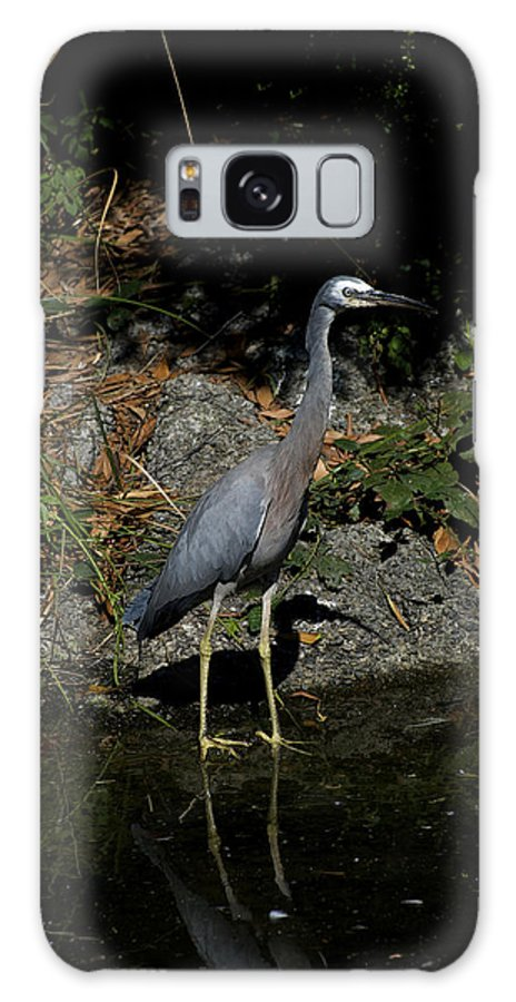 Australian Galaxy S8 Case featuring the photograph Look Out Fish by Graham Palmer