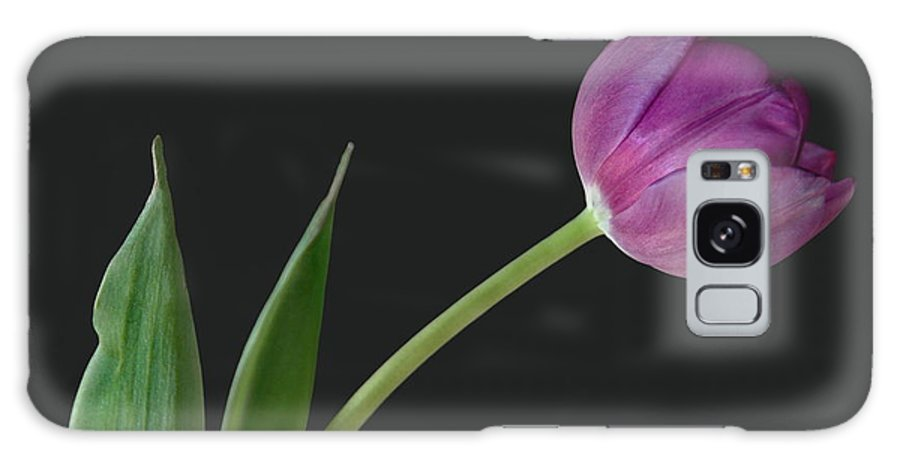 Flower Galaxy Case featuring the photograph Looking Ahead by Dan Holm