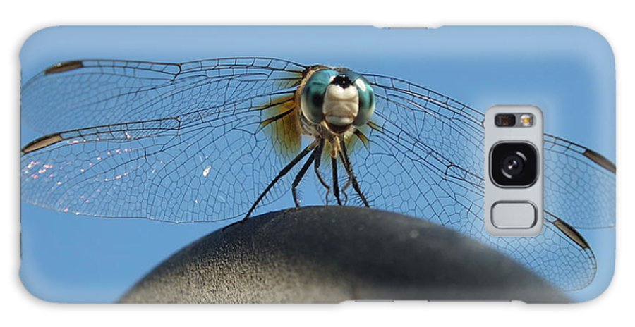 Dragon Fly Galaxy S8 Case featuring the photograph Looking At You by Melissa Lightner