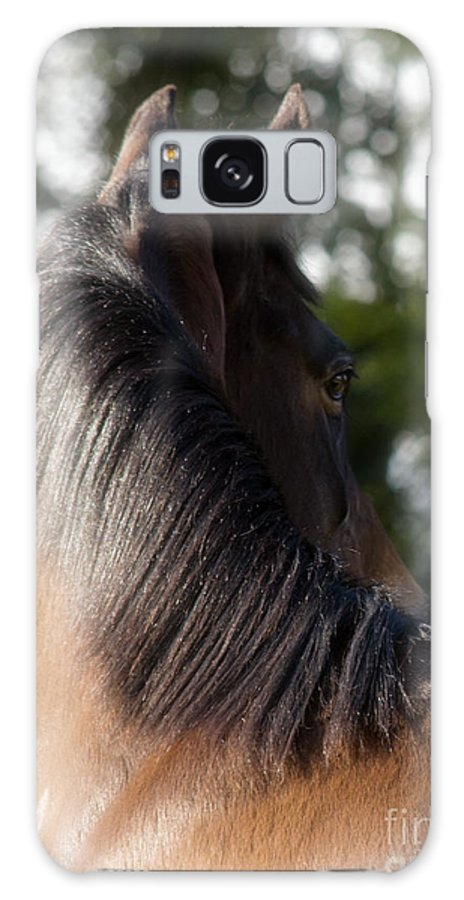 Horse Galaxy S8 Case featuring the photograph Looking Back by Angel Ciesniarska