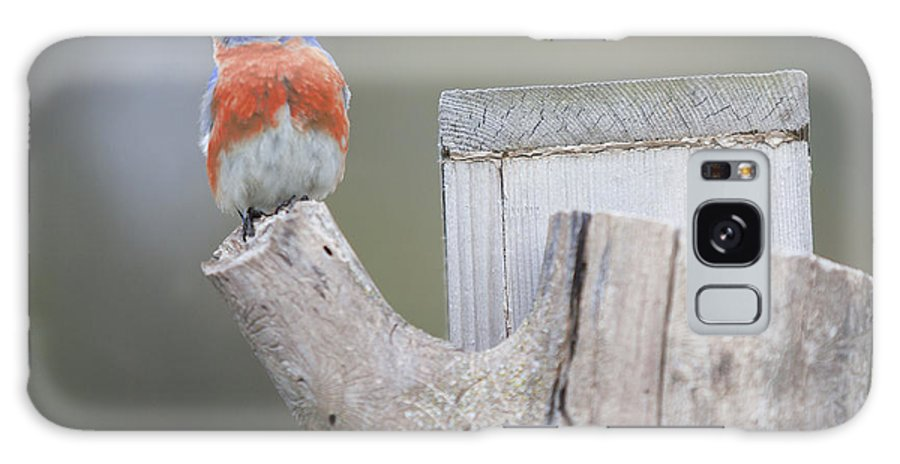 Bluebird Galaxy S8 Case featuring the photograph Looking Left by John Crothers