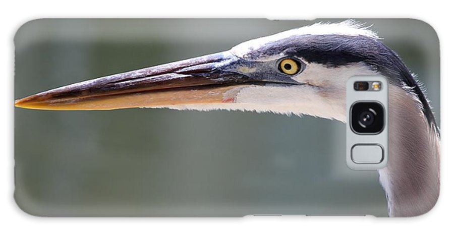 Great Blue Heron Galaxy S8 Case featuring the photograph Looking Sharp by Theresa Willingham