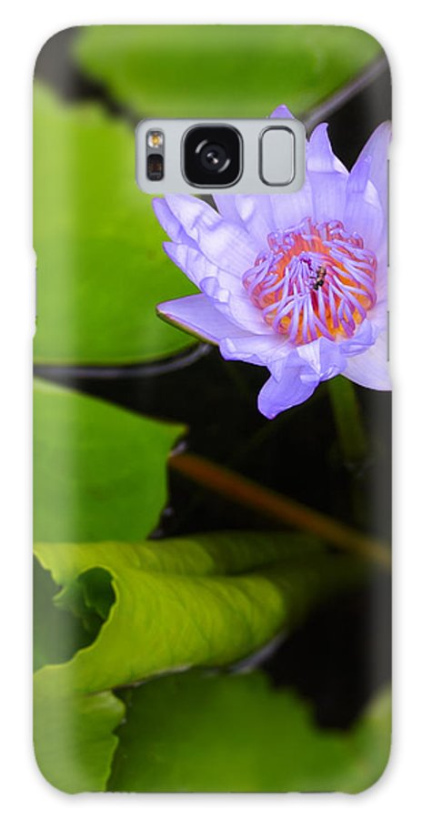 3scape Photos Galaxy S8 Case featuring the photograph Lotus Flower And Lily Pad by Adam Romanowicz