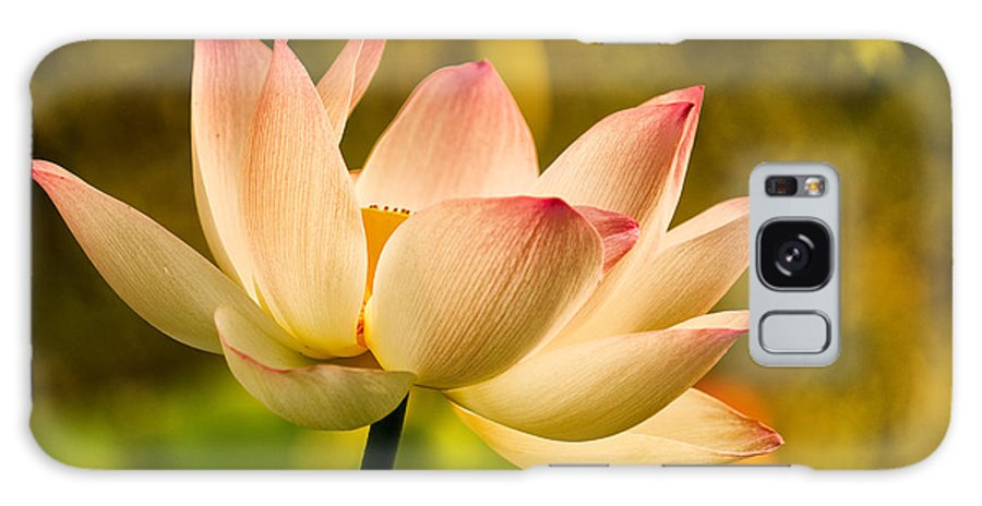 Lotus Galaxy S8 Case featuring the photograph Lotus In Morning Light by Rick Barnard