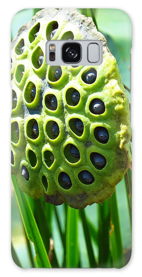 Lotus Pod Galaxy S8 Case featuring the photograph Lotus Pod by Shawna Rowe