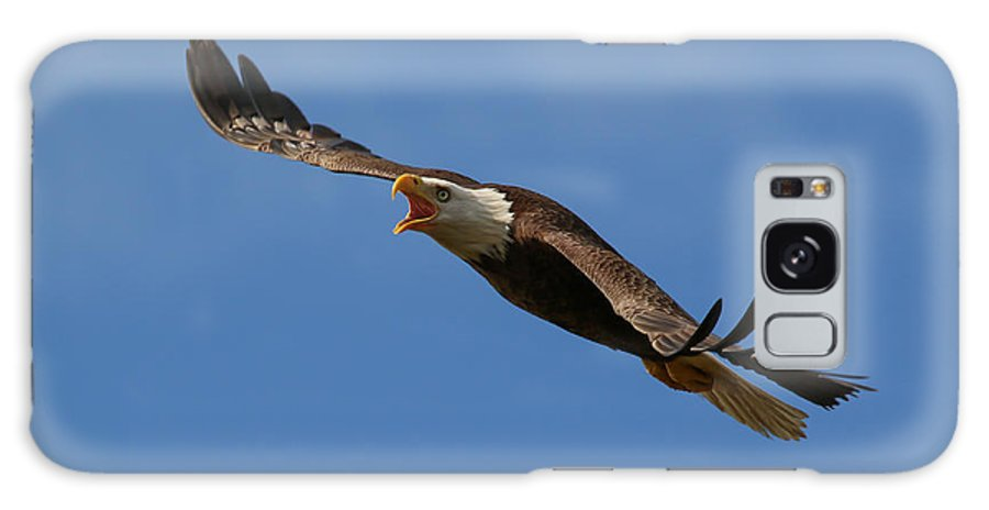 Bald Eagle Galaxy S8 Case featuring the photograph Loud Angle by Jeremy Helwig