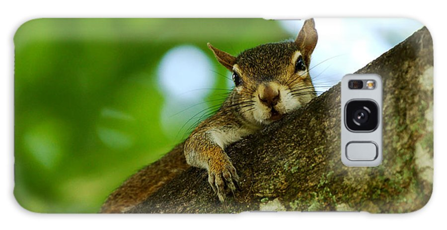 Squirrel Galaxy S8 Case featuring the photograph Lounging Squirrel by Dan Dennison