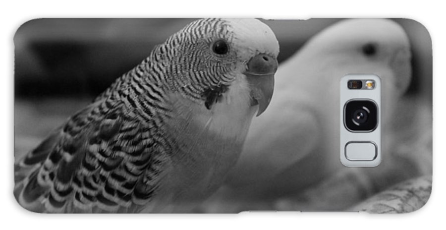 Parakeets Galaxy S8 Case featuring the photograph Love Birds by Kyra Chambers