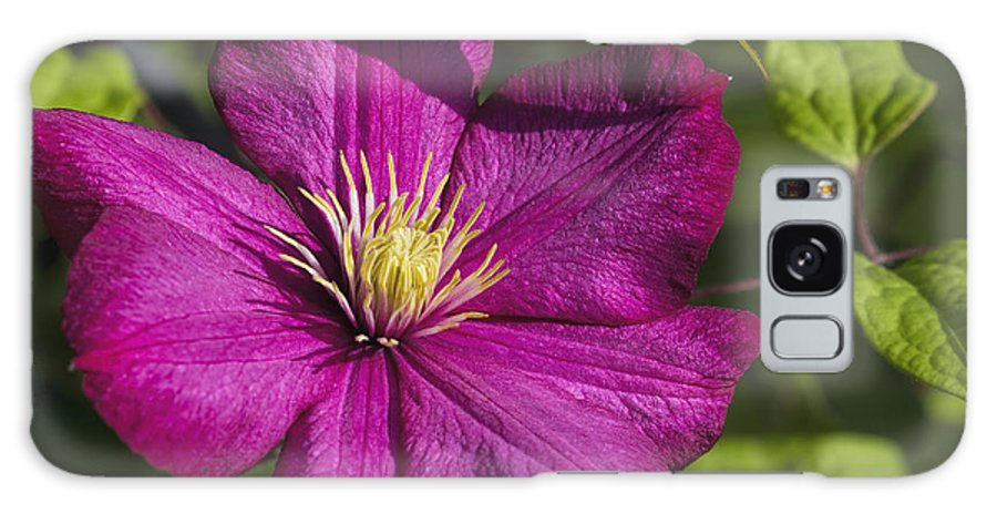 Clematis Galaxy S8 Case featuring the photograph Lovely Magenta Pink Clematis Blossom by Kathy Clark