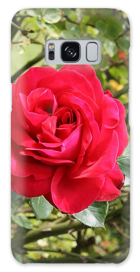 Rose Galaxy S8 Case featuring the photograph Lovely Red Rose by Christiane Schulze Art And Photography