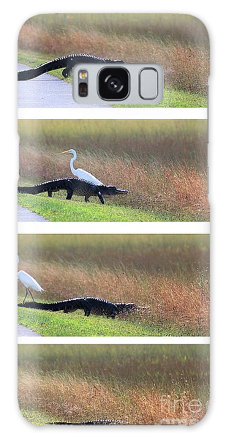 Alagagtor Galaxy S8 Case featuring the photograph Lucky Ibis by David Call