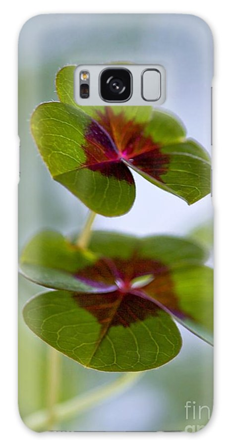 Oxalis Galaxy S8 Case featuring the photograph Lucky Lovers by Maria Ismanah Schulze-Vorberg