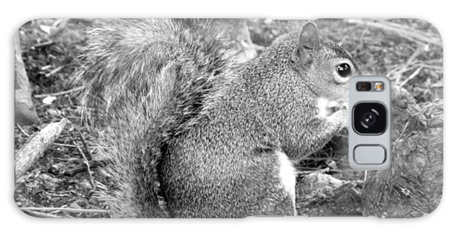 Squirrel Galaxy S8 Case featuring the photograph Lunch Break II by Jeannette Martir