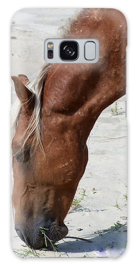 Wild Spanish Mustang Galaxy S8 Case featuring the photograph Lunch Time For The Wild One by Kim Galluzzo Wozniak