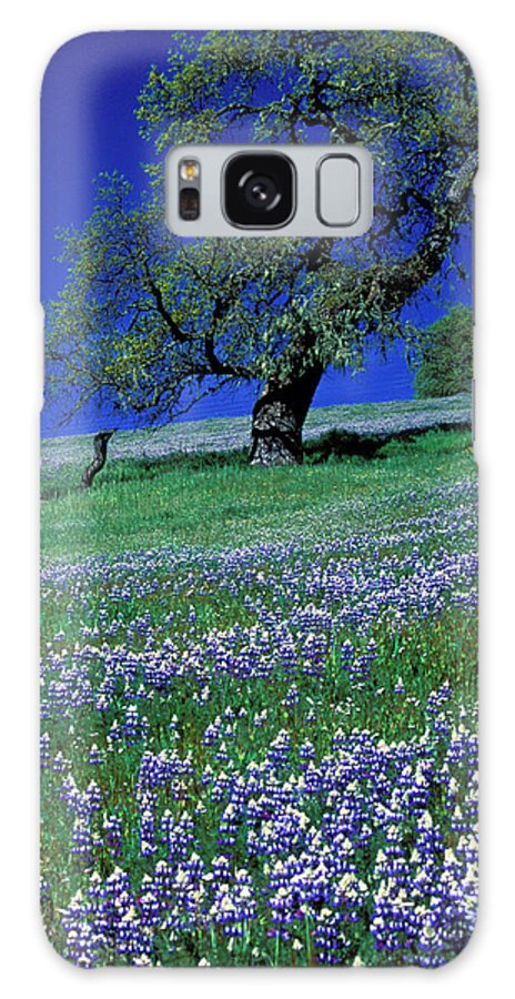 Flowers Galaxy S8 Case featuring the photograph Lupine And The Leaning Tree by Kathy Yates