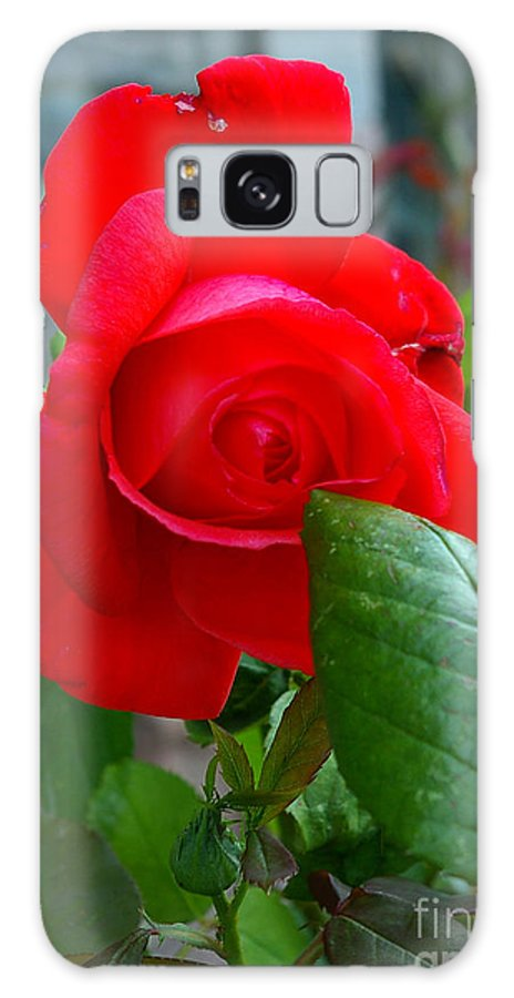 Rose Galaxy S8 Case featuring the photograph Luss Rose by Nancy L Marshall