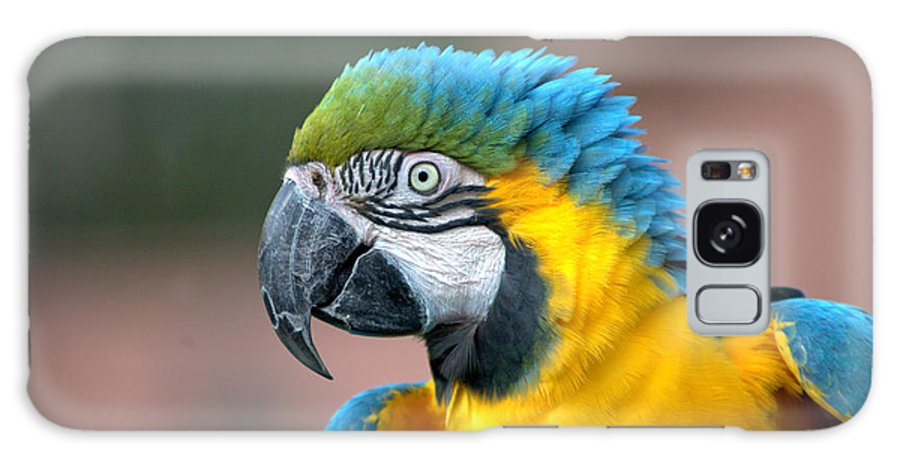 Macaw Galaxy S8 Case featuring the photograph Macaw by Jesse Thrush