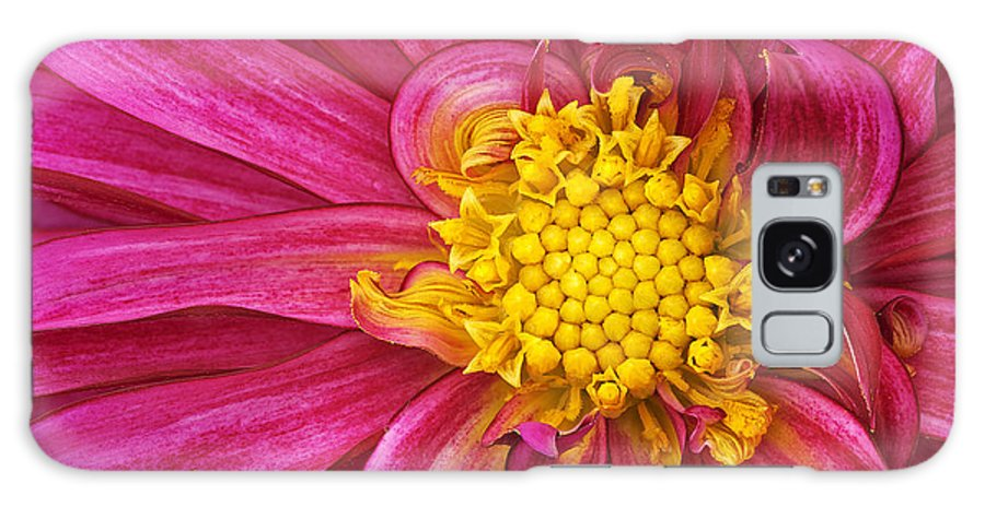 Backgrounds Galaxy S8 Case featuring the photograph Magenta Dahlia by Dean Pennala