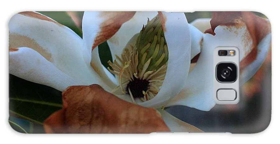 Magnolia Galaxy S8 Case featuring the photograph Magnolia For A Day by Amanda Holmes Tzafrir