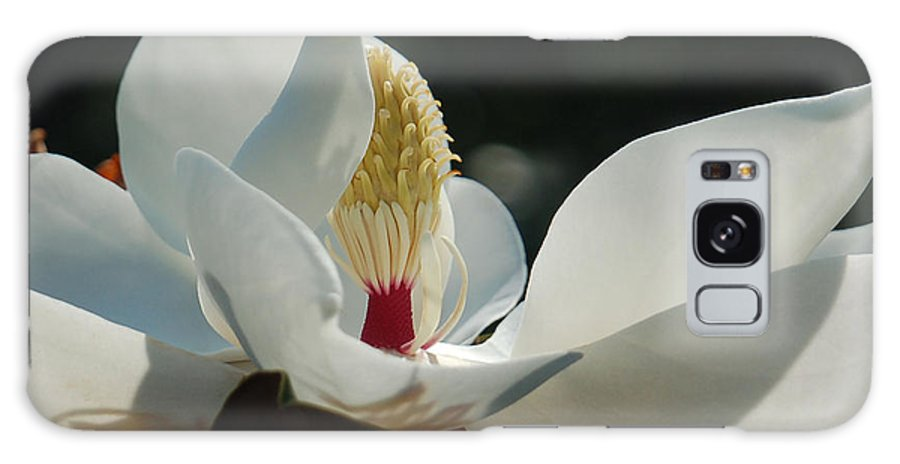 Magnolia Galaxy Case featuring the photograph Magnolia Tiny Gem by Suzanne Gaff