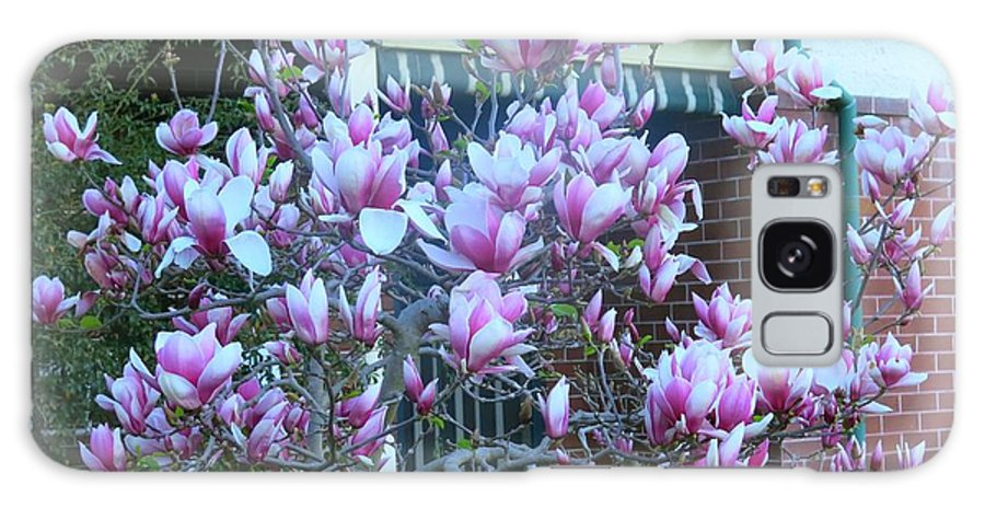 Magnolia Tree Galaxy S8 Case featuring the photograph Magnolias At Home by Leanne Seymour