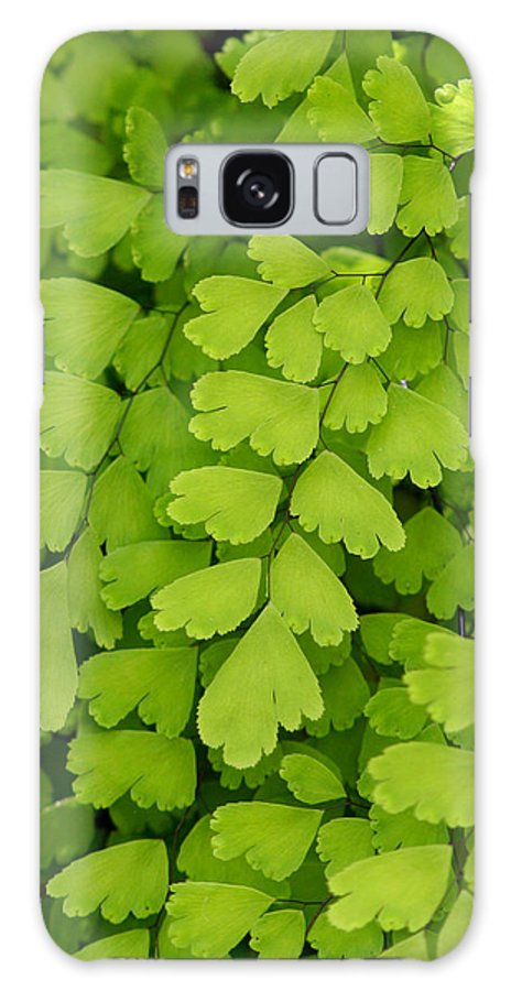 Fern Galaxy S8 Case featuring the photograph Maidenhair Fern by Art Block Collections