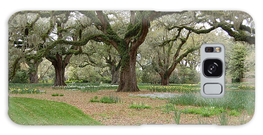 Live Oak Galaxy Case featuring the photograph Majestic Live Oaks In Spring by Suzanne Gaff
