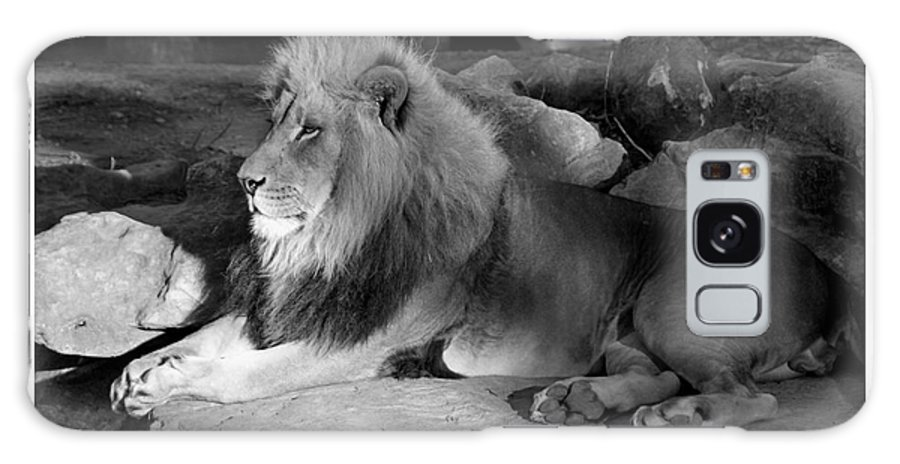 Lion Galaxy S8 Case featuring the photograph Majestic by Robert Edgar