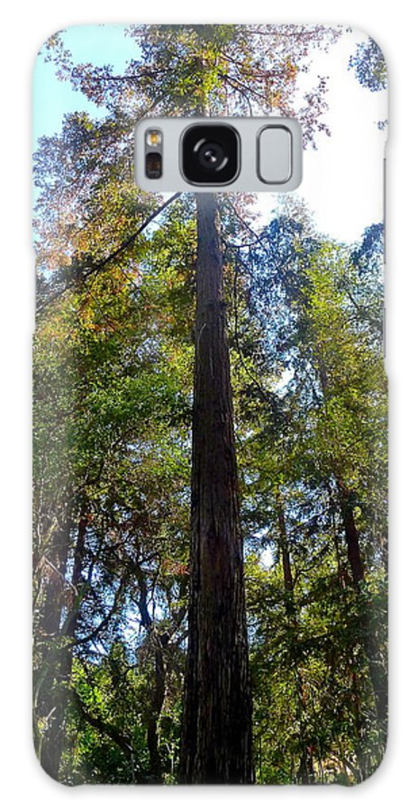 Tree Galaxy S8 Case featuring the photograph Majestic Trees by Denise Mazzocco