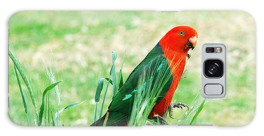 King Parrot Galaxy S8 Case featuring the photograph Male King Parrot by Christopher Edmunds