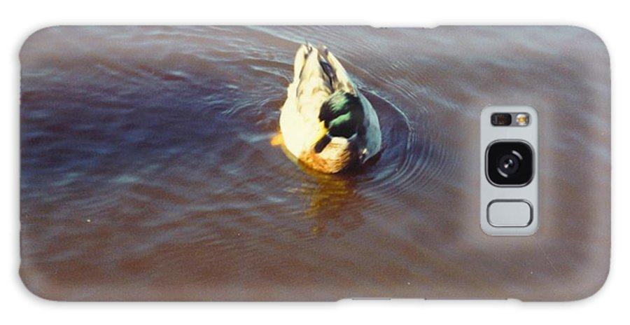 Drifting Alone Galaxy S8 Case featuring the photograph Male Mallard Duck by Robert Floyd