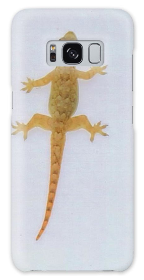 Climbing Wall At Night Galaxy S8 Case featuring the photograph Male Nocturnal Lizard by Robert Floyd