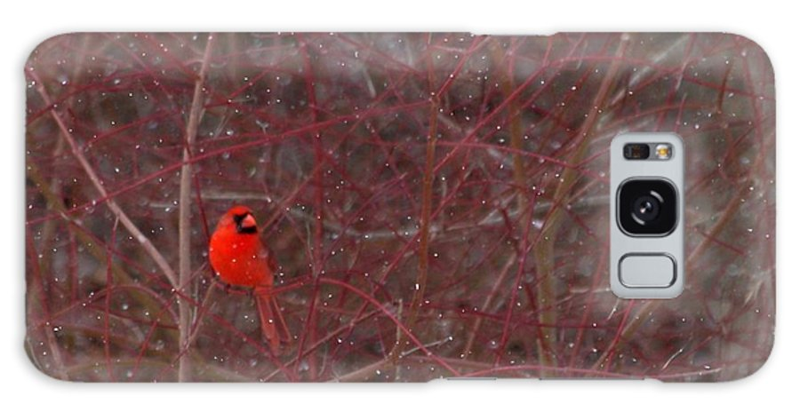 Bird Galaxy S8 Case featuring the photograph Male Red Cardinal In The Snow by Kenny Glotfelty