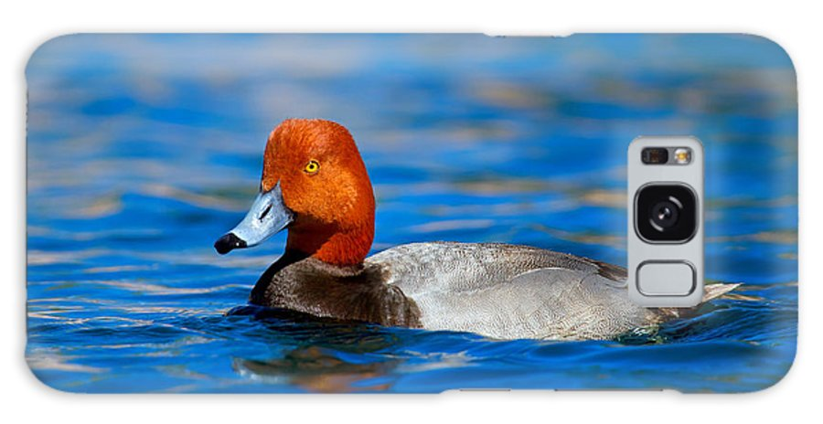 Bird Galaxy S8 Case featuring the photograph Male Red Head Duck by John Absher