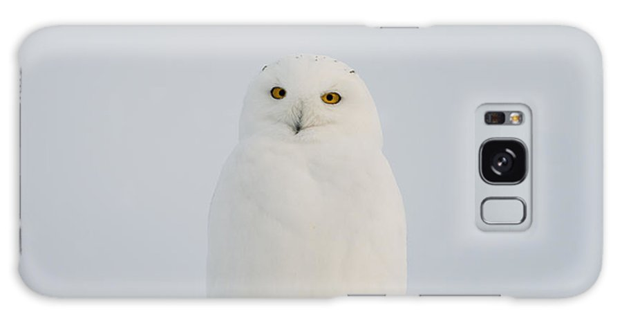 Snowy Owl Galaxy S8 Case featuring the photograph Male Snowy Owl by Shannon Carson
