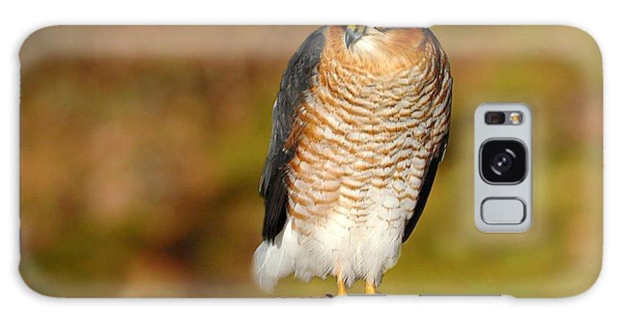 Sparrowhawk Galaxy S8 Case featuring the photograph Male Sparrowhawk by Gavin Macrae