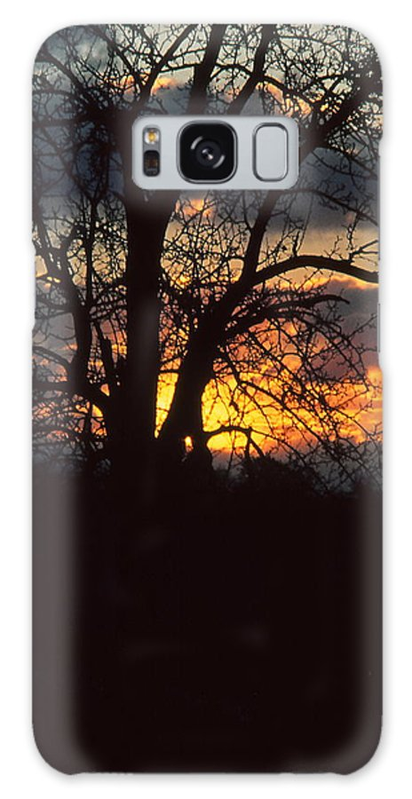 Tree Galaxy S8 Case featuring the photograph Malevolent Sunset by Brian Lucia