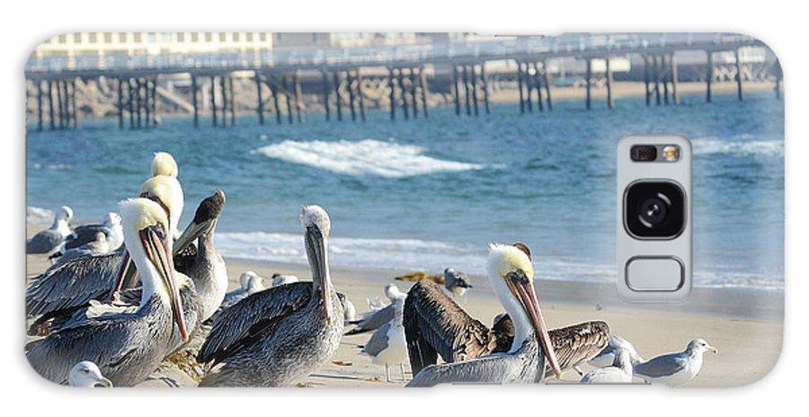 California Brown Pelicans Galaxy S8 Case featuring the photograph Malibu Hot Spot by Fraida Gutovich
