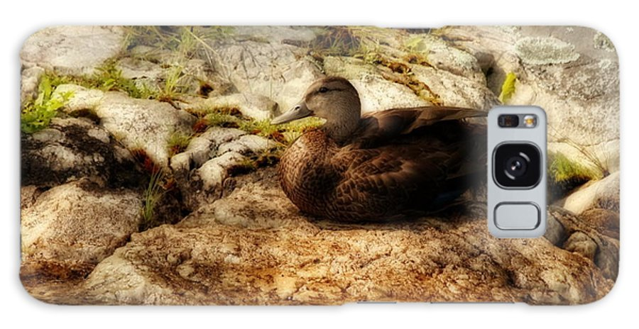 Duck Galaxy S8 Case featuring the photograph Mallard Duck Onaping by Marjorie Imbeau