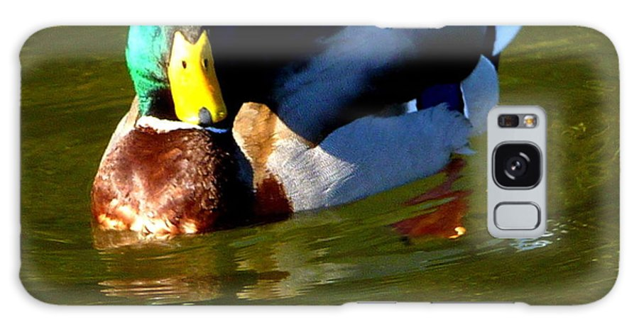 Duck Galaxy S8 Case featuring the photograph Mallard Male Duck by Susan Garren