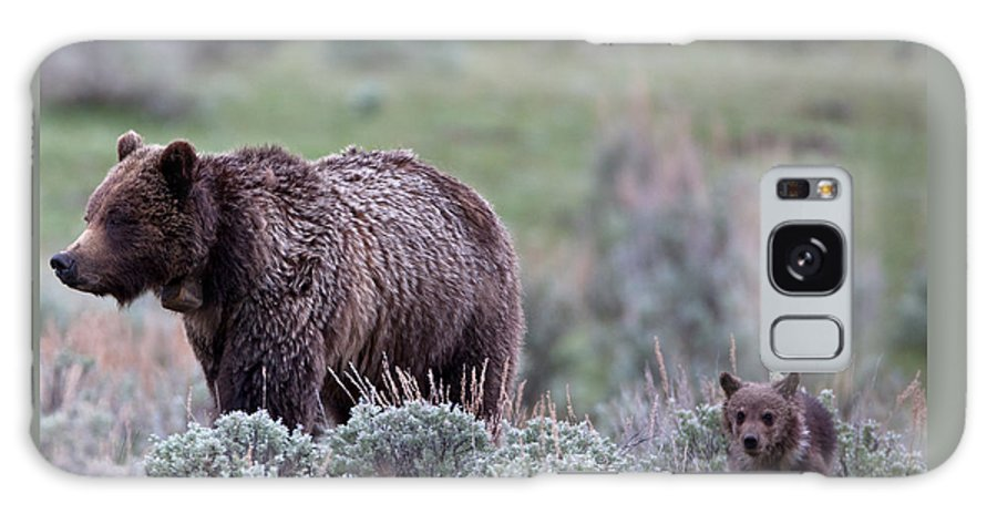 Grizzly Galaxy S8 Case featuring the photograph Mama Grizzly Guiding Cub by Natural Focal Point Photography